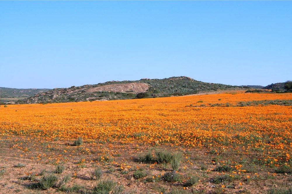 Namaqualand-004-x2
