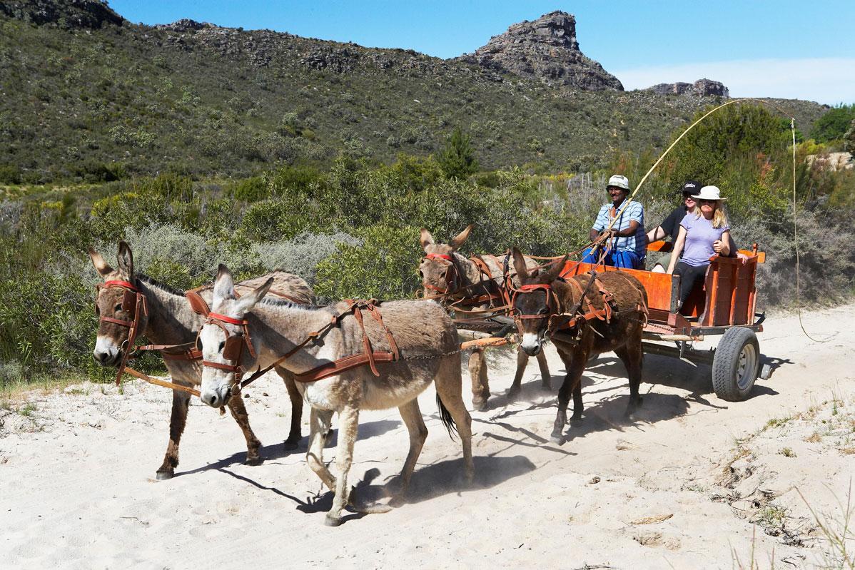 donkey-carts-heuningvlei-cederberg-2