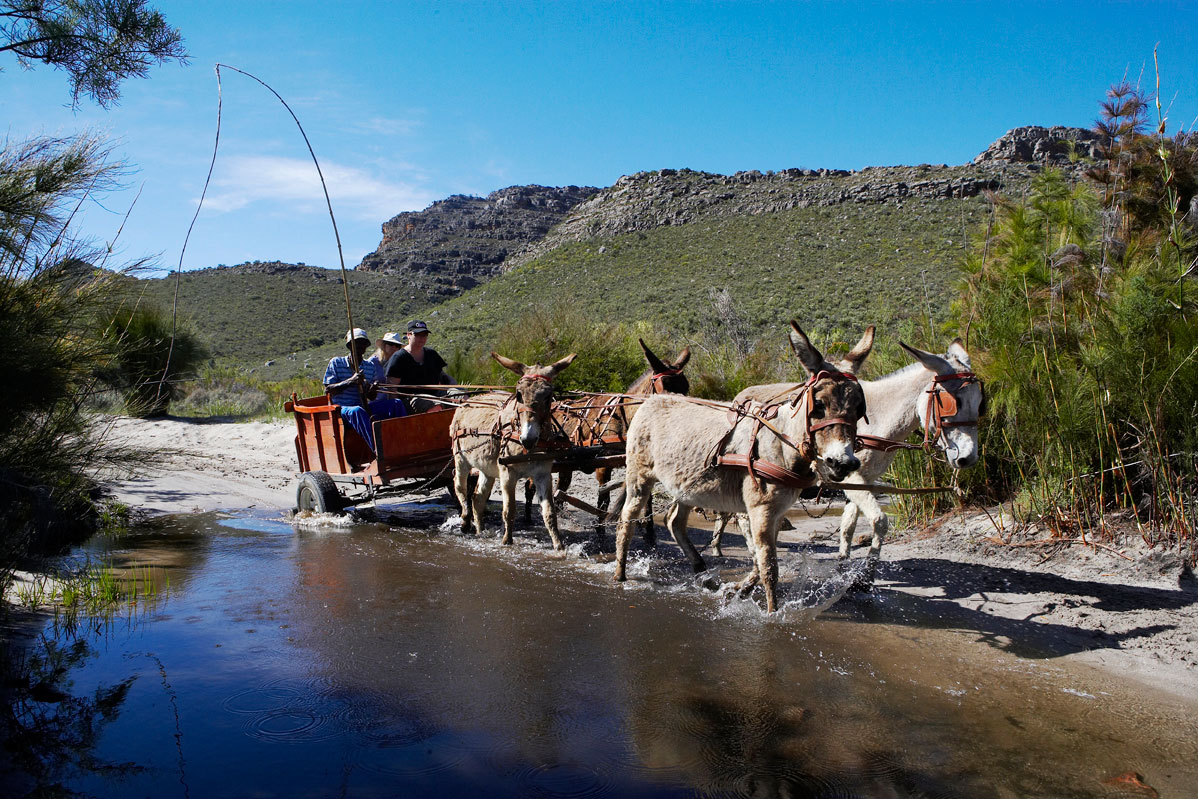 donkey-carts-wupperthal-3
