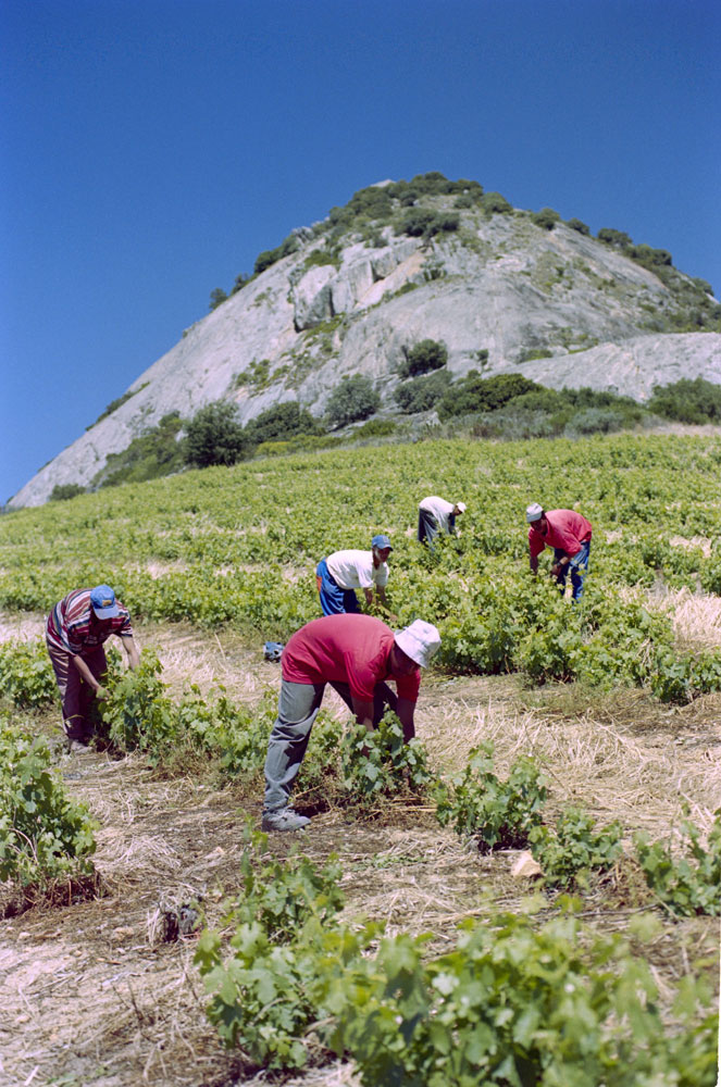 Babylons-Peak-workers